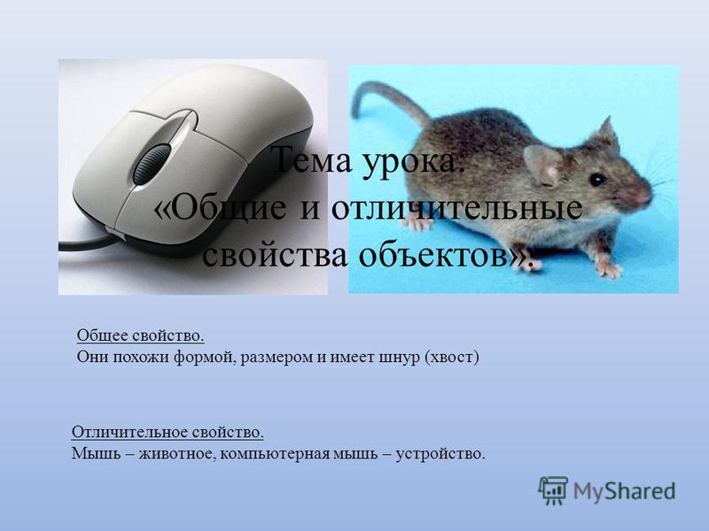 Общее свойство. Они похожи формой, размером и имеет шнур (хвост) Отличительное свойство. Мышь – животное, компьютерная мышь – устройство. Тема урока: «Общие и отличительные свойства объектов».