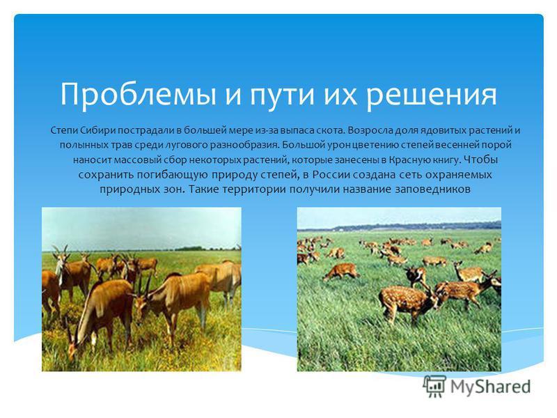 Проблемы и пути их решения Степи Сибири пострадали в большей мере из-за выпаса скота. Возросла доля ядовитых растений и полынных трав среди лугового разнообразия. Большой урон цветению степей весенней порой наносит массовый сбор некоторых растений, к
