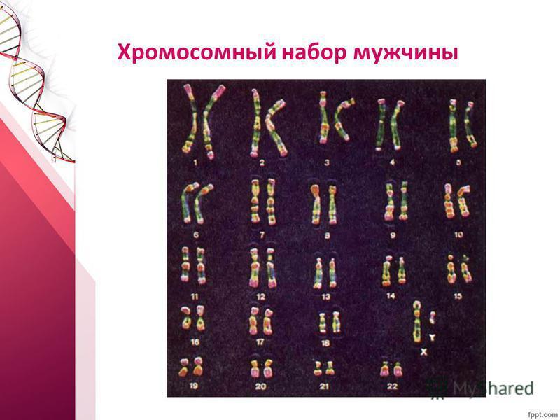 Хромосомный набор мужчины