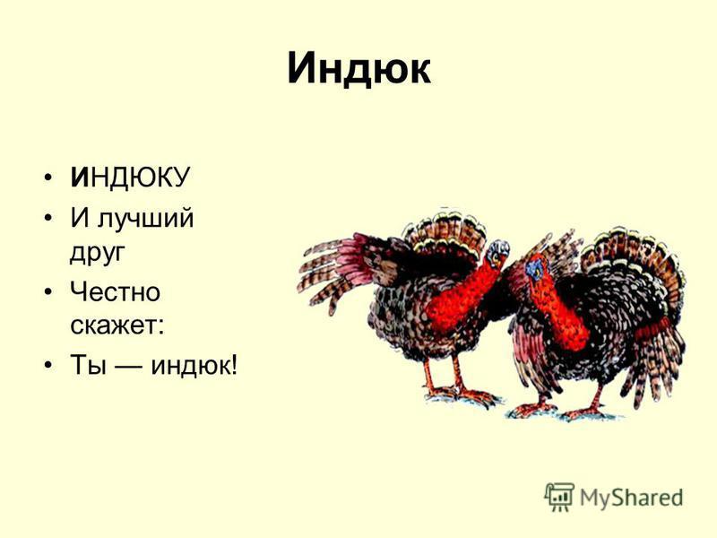 Индюк ИНДЮКУ И лучший друг Честно скажет: Ты индюк!