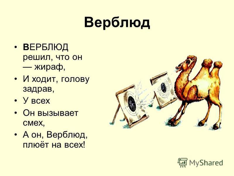 Верблюд ВЕРБЛЮД решил, что он жираф, И ходит, голову задрав, У всех Он вызывает смех, А он, Верблюд, плюёт на всех!