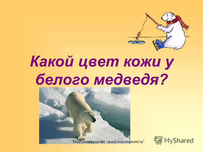 Какой цвет кожи у белого медведя? Мой университет - www.moi-mummi.ru