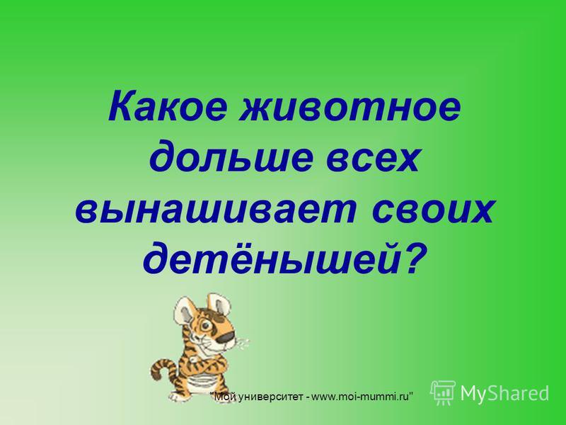 Какое животное дольше всех вынашивает своих детёнышей? Мой университет - www.moi-mummi.ru