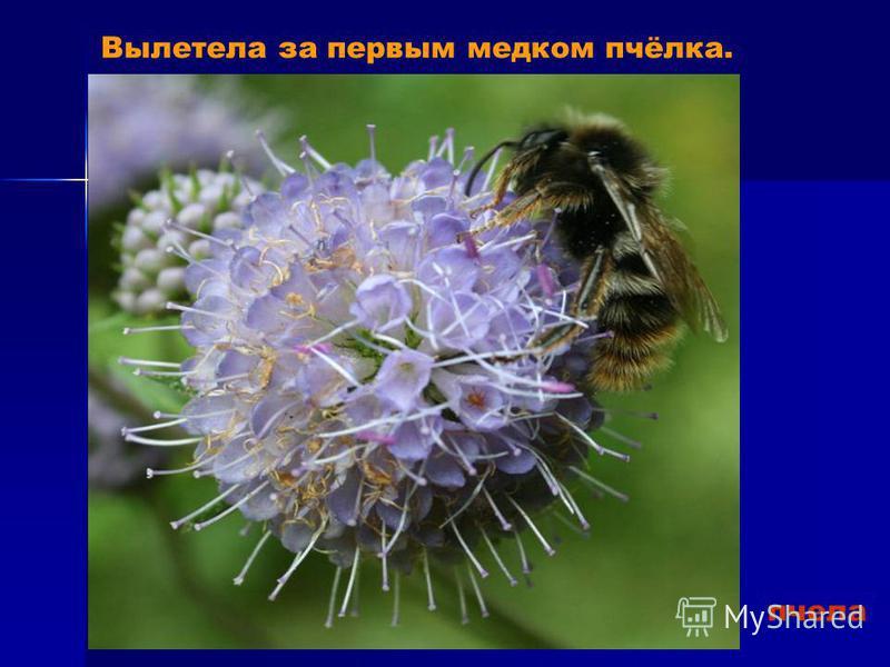 пчела Вылетела за первым медком пчёлка.