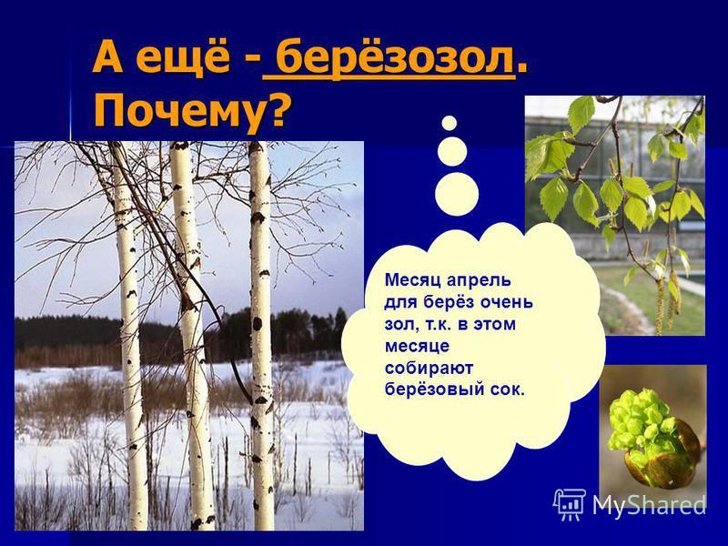 А ещё - берёзозол. Почему? Месяц апрель для берёз очень зол, т.к. в этом месяце собирают берёзовый сок.