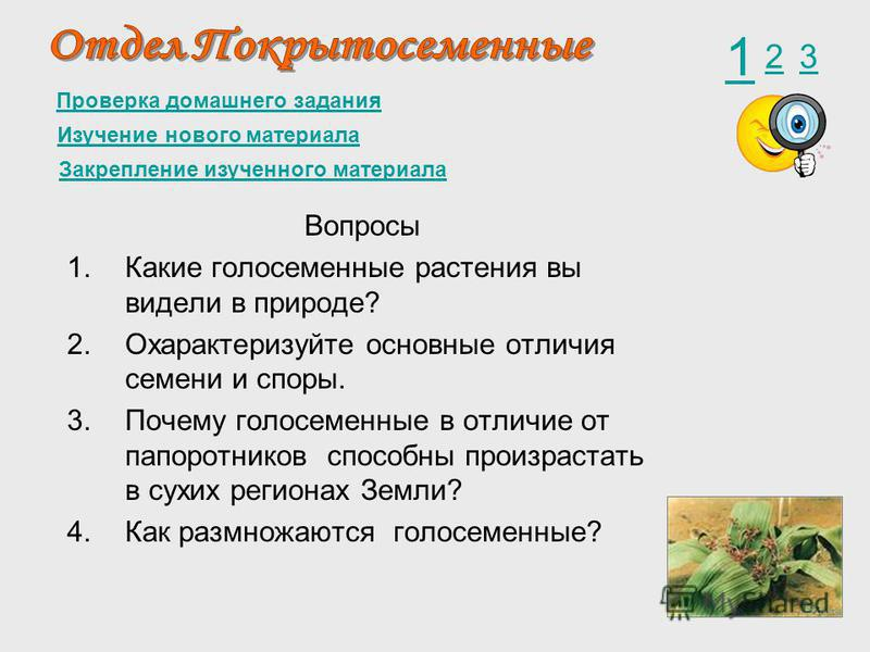 Проверка домашнего задания 1 23 Изучение нового материала Закрепление изученного материала Вопросы 1. Какие голосеменные растения вы видели в природе? 2. Охарактеризуйте основные отличия семени и споры. 3. Почему голосеменные в отличие от папоротнико