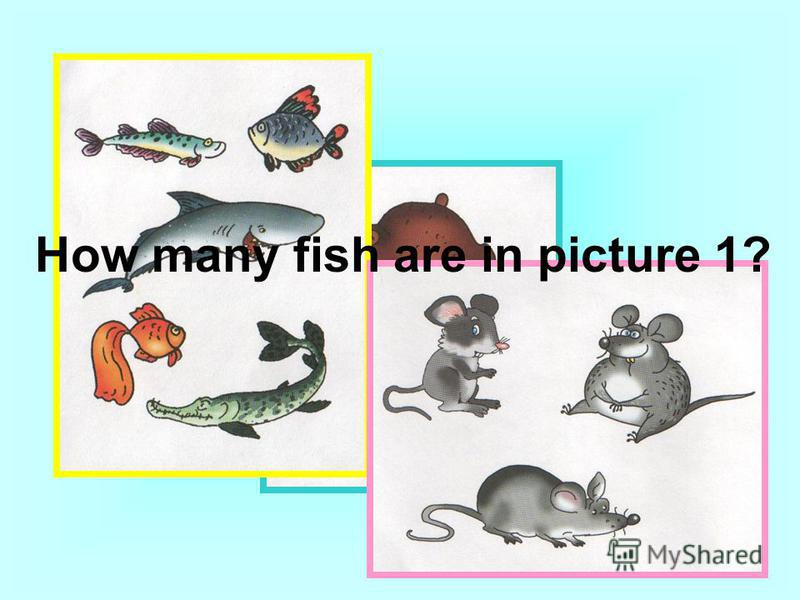 How many fish are in picture 1?