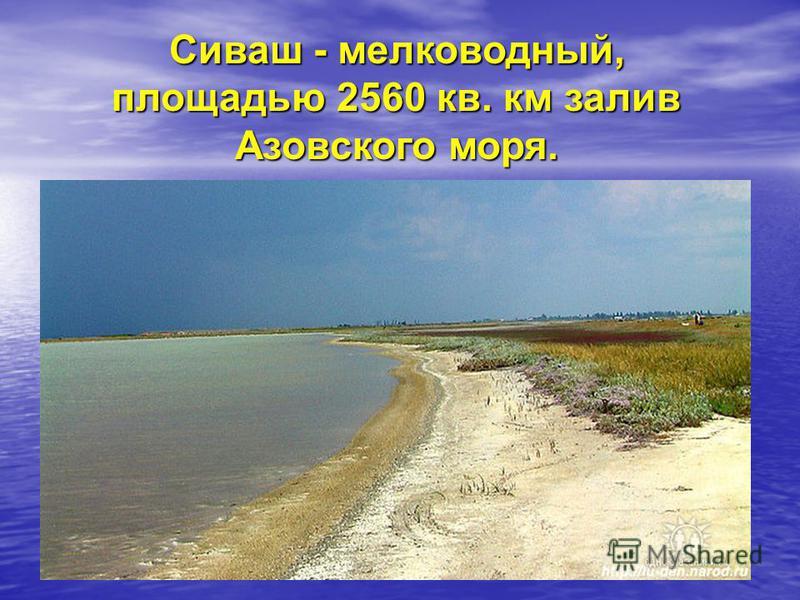 Сиваш - мелководный, площадью 2560 кв. км залив Азовского моря.