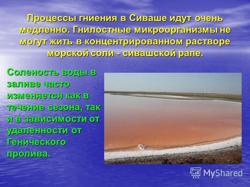 Процессы гниения в Сиваше идут очень медленно. Гнилостные микроорганизмы не могут жить в концентрированном растворе морской соли - сивашской рапе. Соленость воды в заливе часто изменяется как в течение сезона, так и в зависимости от удаленности от Ге
