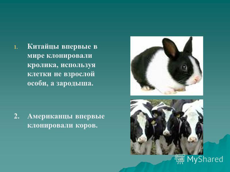1. 1. Китайцы впервые в мире клонировали кролика, используя клетки не взрослой особи, а зародыша. 2. Американцы впервые клонировали коров.