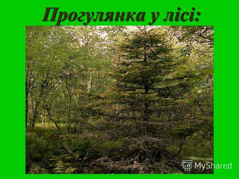 Прогулянка у лісі: