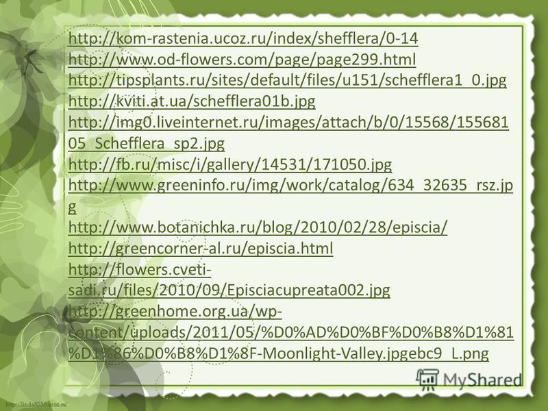 http://linda6035.ucoz.ru/ http://kom-rastenia.ucoz.ru/index/shefflera/0-14 http://www.od-flowers.com/page/page299. html http://tipsplants.ru/sites/default/files/u151/schefflera1_0. jpg http://kviti.at.ua/schefflera01b.jpg http://img0.liveinternet.ru/