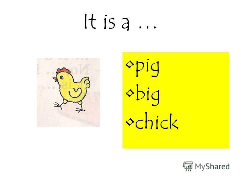 It is a … pig big chick