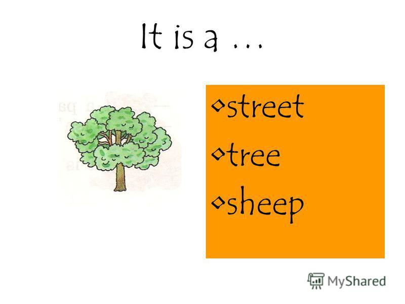 It is a … street tree sheep
