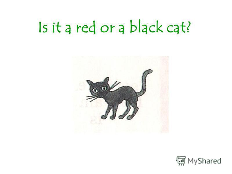 Is it a red or a black cat?