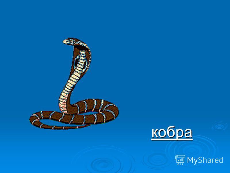 Отгадай загадки: Ядовитая змея В жарких странах проживает. При опасности любой Воротник свой раскрывает. Пятна ниже головы. Как зовут её, скажи?