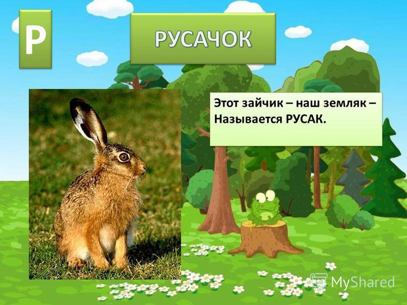 Этот зайчик – наш земляк – Называется РУСАК. Этот зайчик – наш земляк – Называется РУСАК. Р Р