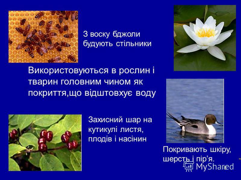8 Воски Використовуються в рослин і тварин головним чином як покриття,що відштовхує воду Покривають шкіру, шерсть і піря. З воску бджоли будують стільники Захисний шар на кутикулі листя, плодів і насінин
