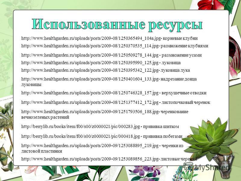 http://www.healthgarden.ru/uploads/posts/2009-08/1250365494_104a.jpg- корневые клубни http://www.healthgarden.ru/uploads/posts/2009-08/1250370535_114.jpg- размноженнии клубнями http://www.healthgarden.ru/uploads/posts/2009-08/1250509278_144. jpg - ра