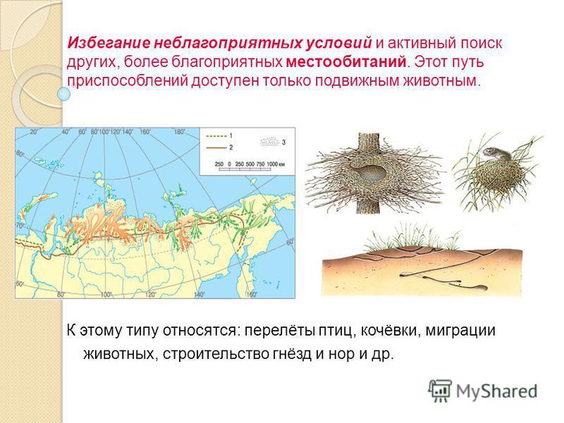 Избегание неблагоприятных условий и активный поиск других, более благоприятных местообитаний. Этот путь приспособлений доступен только подвижным животным. К этому типу относятся: перелёты птиц, кочёвки, миграции животных, строительство гнёзд и нор и
