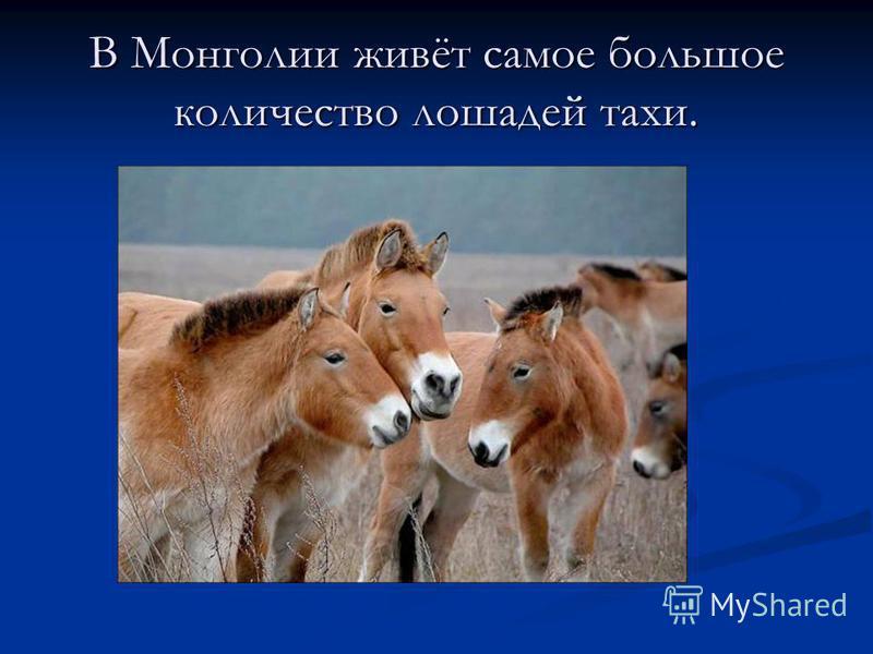 В Монголии живёт самое большое количество лошадей таки.