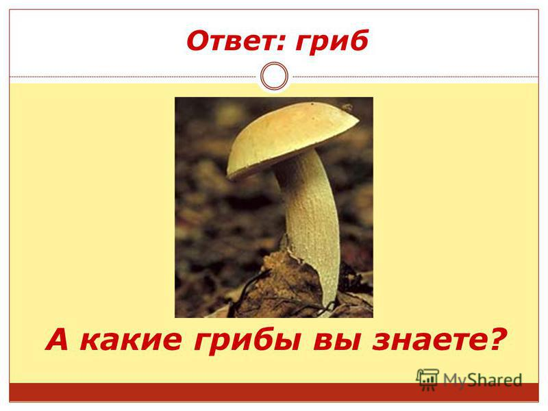 Ответ: гриб А какие грибы вы знаете?