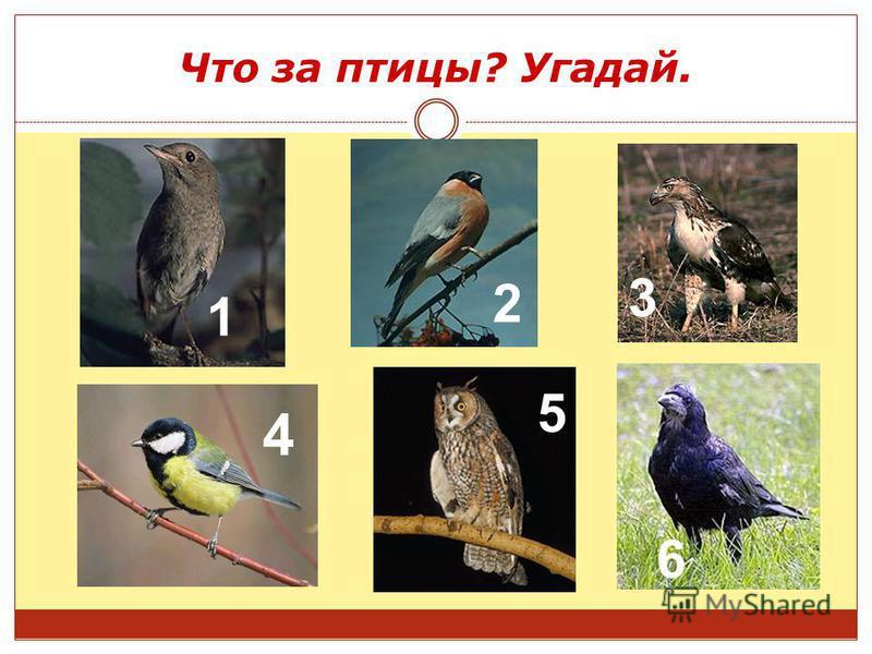 Что за птицы? Угадай. 1 2 3 5 6 4