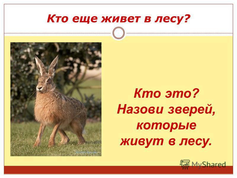 Кто еще живет в лесу? Кто это? Назови зверей, которые живут в лесу.