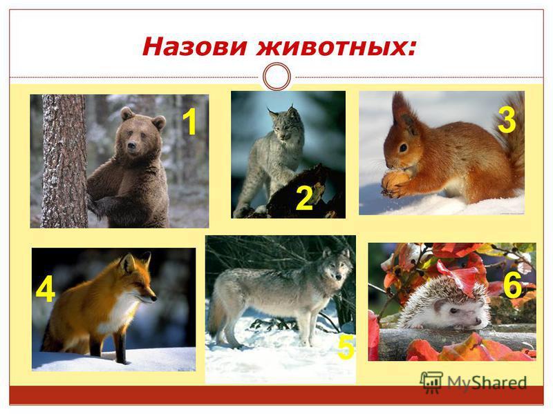 Назови животных: 2 45 3 6 4 1