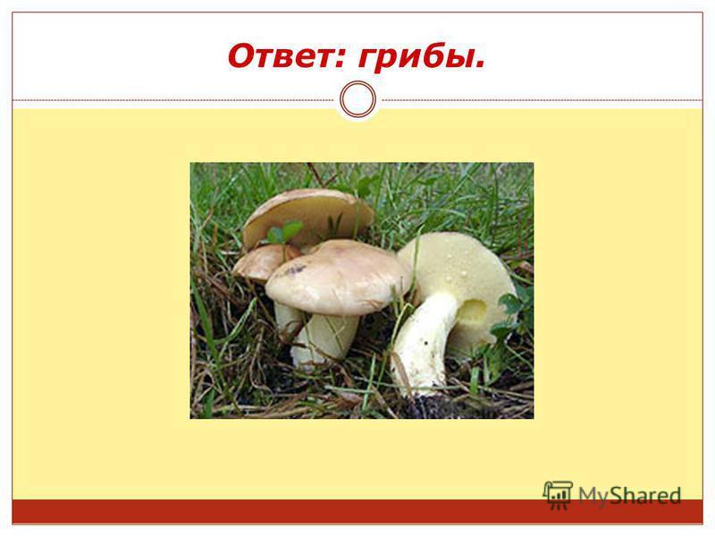 Ответ: грибы.