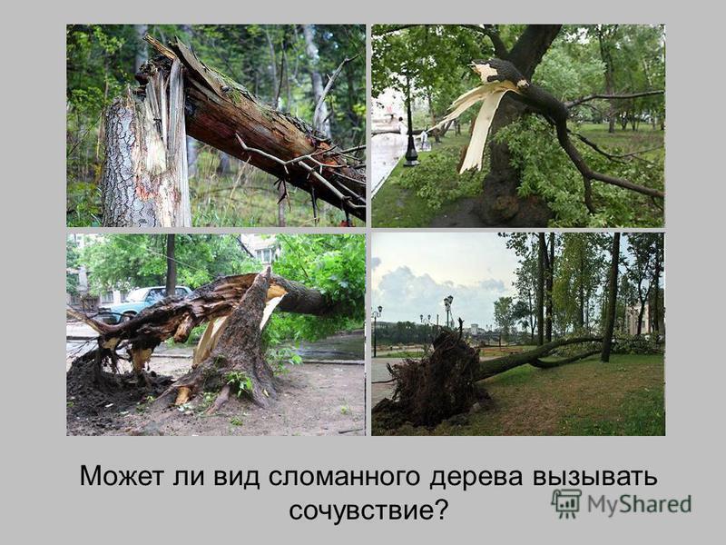 Может ли вид сломанного дерева вызывать сочувствие?