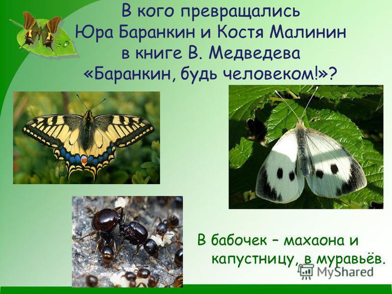 В кого превращались Юра Баранкин и Костя Малинин в книге В. Медведева «Баранкин, будь человеком!»? В бабочек – махаона и капустницу, в муравьёв.