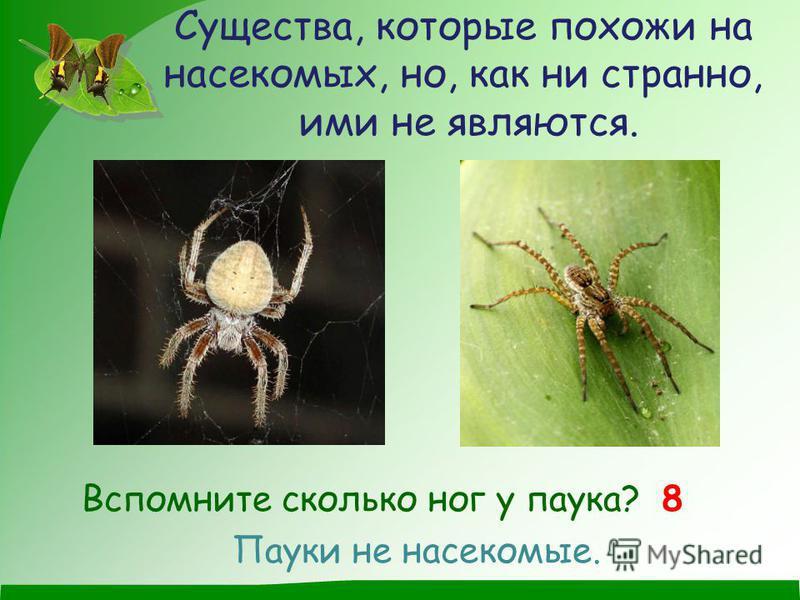 Существа, которые похожи на насекомых, но, как ни странно, ими не являются. Вспомните сколько ног у паука? 8 Пауки не насекомые.