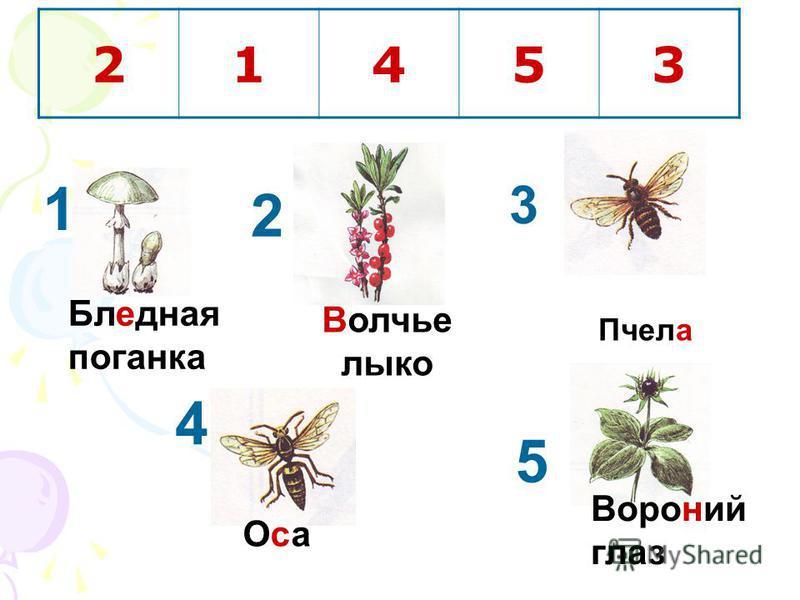 Пчела Бледная поганка Вороний глаз 21453 Оса Оса 1 2 3 4 Волчье лыко 5