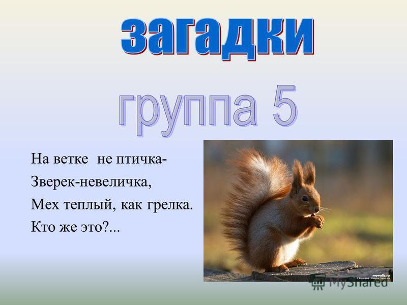 На ветке не птичка - Зверек - невеличка, Мех теплый, как грелка. Кто же это ?...
