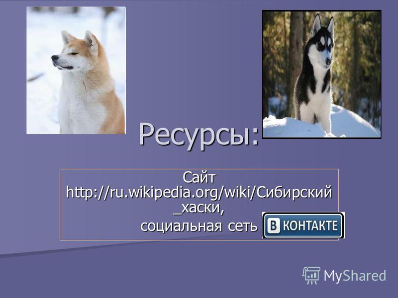 Ресурсы: Сайт http://ru.wikipedia.org/wiki/Сибирский _хаски, социальная сеть