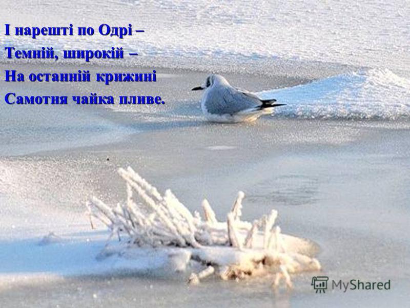 І нарешті по Одрі – Темній, широкій – На останній крижині Самотня чайка пливе.