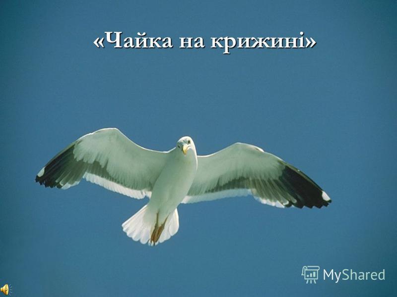 «Чайка на крижині»