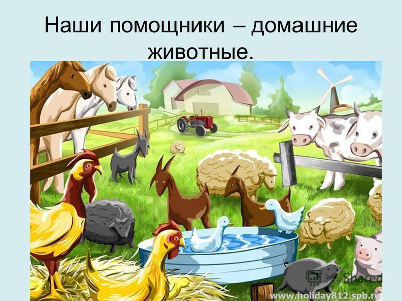 Наши помощники – домашние животные.