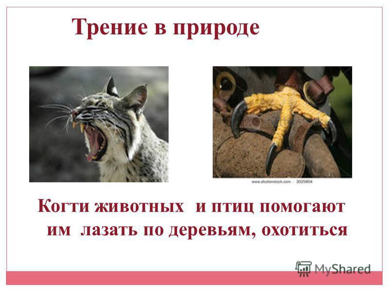 Трение в природе Когти животных и птиц помогают им лазать по деревьям, охотиться