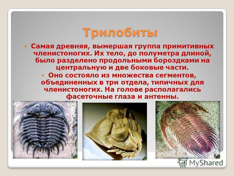 Трилобиты Самая древняя, вымершая группа примитивных членистоногих. Их тело, до полуметра длиной, было разделено продольными бороздками на центральную и две боковые части. Оно состояло из множества сегментов, объединенных в три отдела, типичных для ч