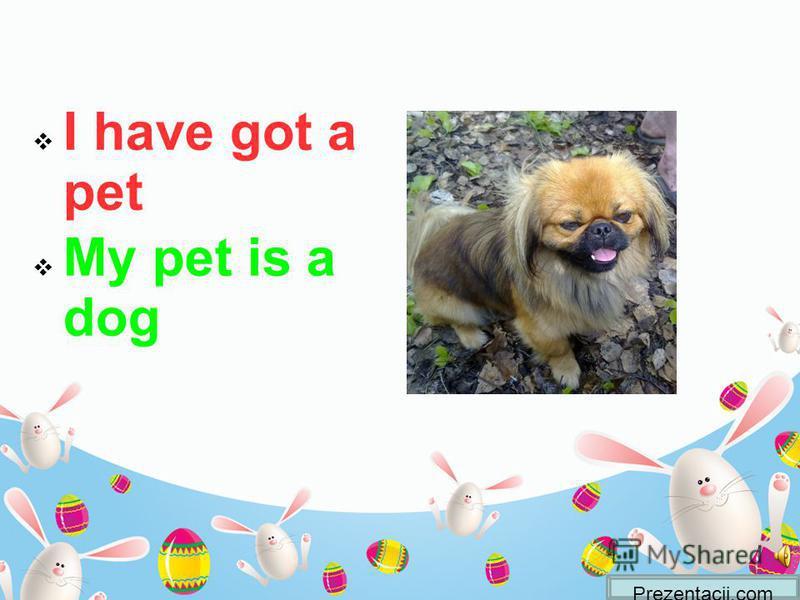 I have got a pet My pet is a dog Prezentacii.com