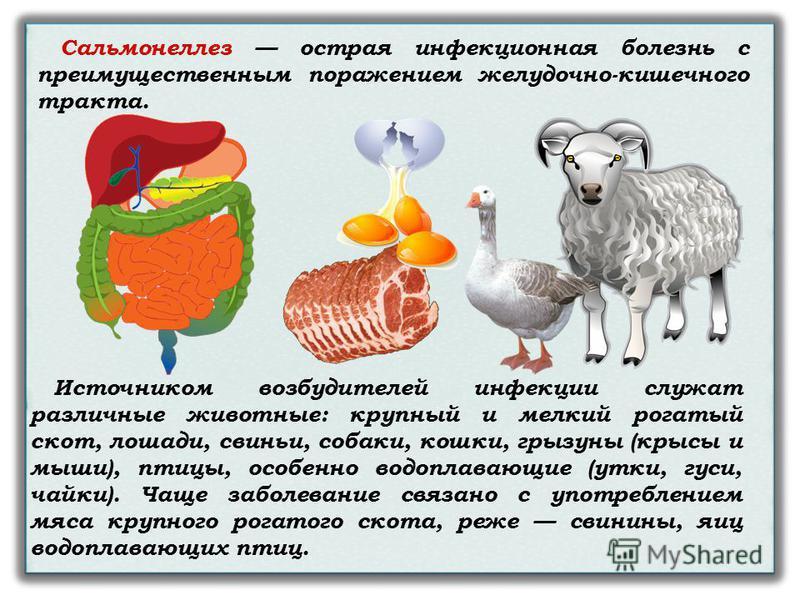 Сальмонеллез острая инфекционная болезнь с преимущественным поражением желудочно-кишечного тракта. Источником возбудителей инфекции служат различные животные: крупный и мелкий рогатый скот, лошади, свиньи, собаки, кошки, грызуны (крысы и мыши), птицы
