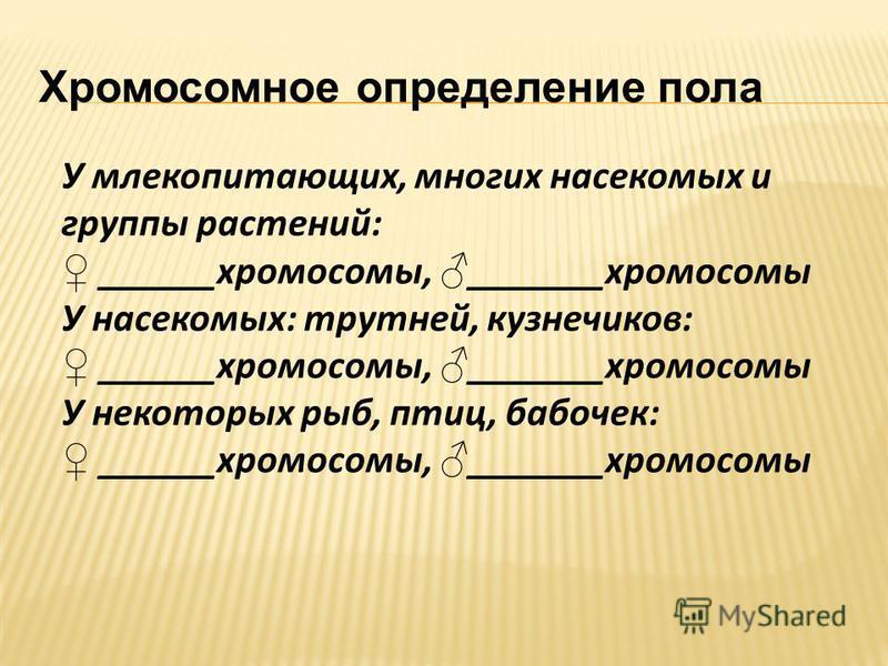Хромосомное определение пола У млекопитающих, многих насекомых и группы растений: ______хромосомы, _______хромосомы У насекомых: трутней, кузнечиков: ______хромосомы, _______хромосомы У некоторых рыб, птиц, бабочек: ______хромосомы, _______хромосомы