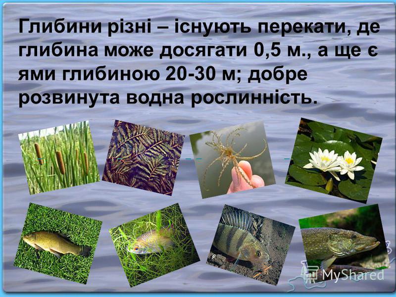 Глибини різні – існують перекати, де глибина може досягати 0,5 м., а ще є ями глибиною 20-30 м; добре розвинута водна рослинність.