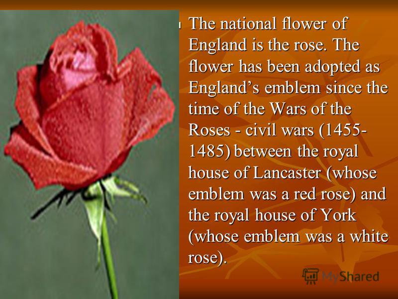 The national flower of England is the rose. The flower has been adopted as Englands emblem since the time of the Wars of the Roses - civil wars (1455- 1485) between the royal house of Lancaster (whose emblem was a red rose) and the royal house of Yor