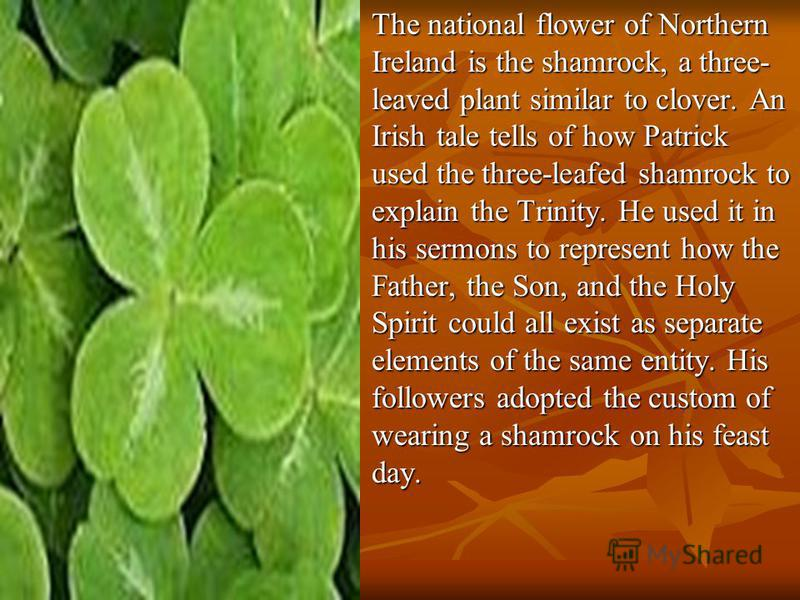 The national flower of Northern Ireland is the shamrock, a three- leaved plant similar to clover. An Irish tale tells of how Patrick used the three-leafed shamrock to explain the Trinity. He used it in his sermons to represent how the Father, the Son