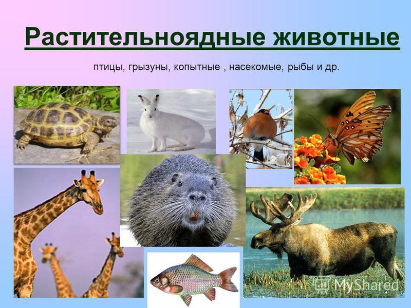 Растительноядные животные птицы, грызуны, копытные, насекомые, рыбы и др.