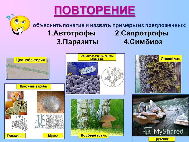 ПОВТОРЕНИЕ объяснить понятия и назвать примеры из предложенных: 1. Автотрофы 2. Сапротрофы 3. Паразиты 4. Симбиоз Подберёзовик Цианобактерия Лишайник