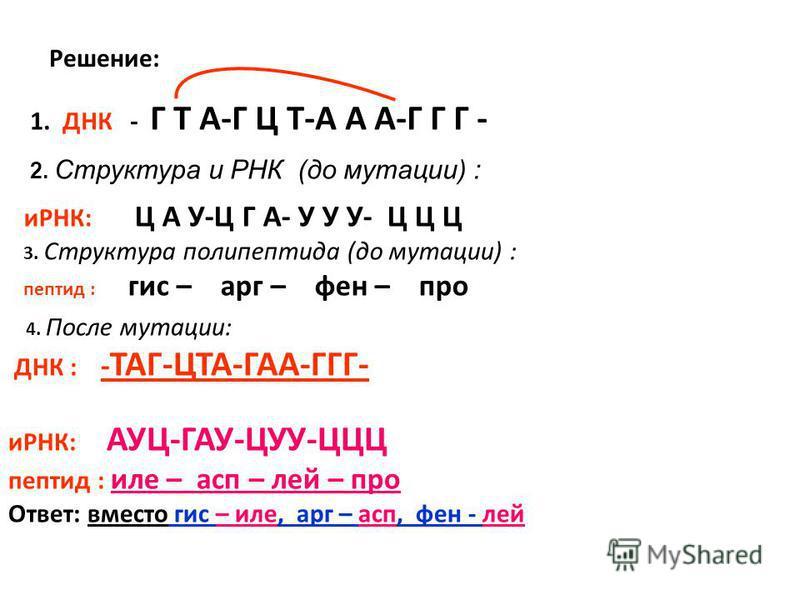 4. После мутации: ДНК : - ТАГ-ЦТА-ГАА-ГГГ- иРНК: АУЦ-ГАУ-ЦУУ-ЦЦЦ пептид : иле – ацп – лей – про Ответ: вместо гис – иле, арг – ацп, фен - лей Решение: 1. ДНК - Г Т А-Г Ц Т-А А А-Г Г Г - иРНК: Ц А У-Ц Г А- У У У- Ц Ц Ц 3. Структура полипептида (до мут